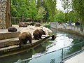 Bears in Augsburg Zoo.jpg