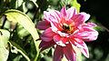 Bee fleur 2-55.jpg