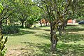 Belize - panoramio (146).jpg