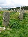 Beltany stone circle - geograph.org.uk - 399128.jpg