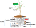 Beneficial microbiota for crop plants.png