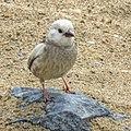 Bird 1530786 N.jpg