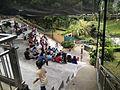 Bird Park in Kuala Lumpur (Malaysia) (41).jpg