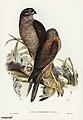 Bird illustration by Elizabeth Gould for Birds of Australia, digitally enhanced from rawpixel's own facsimile book17.jpg