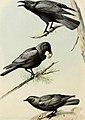 Bird lore (1919) (14563621689).jpg