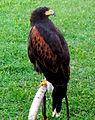 Birds15Slovakia15.JPG