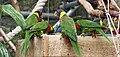 Birds in Plantasia.jpg