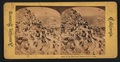 Birds on the Farallon Islands, Pacific Ocean, from Robert N. Dennis collection of stereoscopic views.png