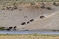 Bison River Crossing 1 (8007275279).jpg