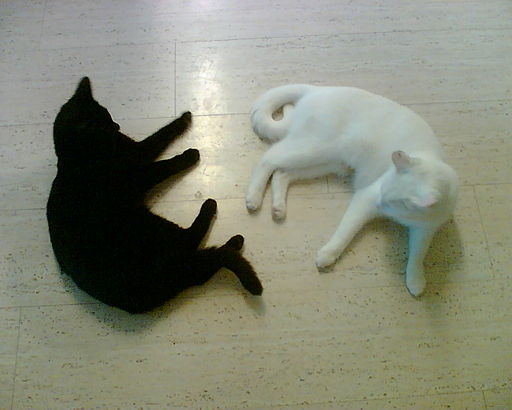 Black cat and white cat, both lying on the floor
