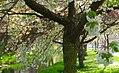 Blossoms 13.jpg