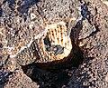 Blue Diamond Hill Fossil Ridge 3.jpg