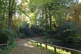 Bois Keroual automne 01.jpg