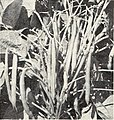 Bolgiano's spring 1965 catalog (1965) (20364882966).jpg