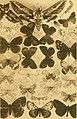 Bollettino della Società entomologica italiana (1910) (20203998980).jpg