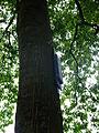 Bomen in van Sonsbeeckpark DSCF7851.JPG