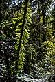 Border Ranges National Park NSW-2750.jpg