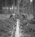Bosbewerking, arbeiders, boomstammen, gereedschappen, Bestanddeelnr 251-7936.jpg