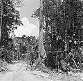 Boslandcreolen bezig met het omzagen van een boom, Bestanddeelnr 252-4876.jpg