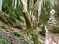 Bosque Grevolosa.jpg