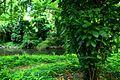 Bosque de La Habana 14.jpg