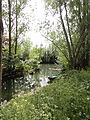 Bourges swamps.JPG