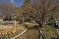 Bowral Tulip Festival - panoramio (1).jpg