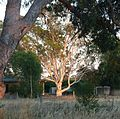 Boxing Day Morning, Kyabram. - panoramio.jpg