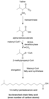 fatty acid synthesis   wikipediabranch chain fatty acid synthesizing system edit