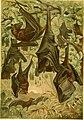 Brehms Tierleben; allgemeine kunde des thierreichs. Mit 1910 abbildungen im text, 11 karten und 180 tafeln in farbendruck und holzschnitt. (1893) (20224785928).jpg