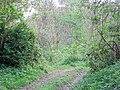 Bridleway and track - geograph.org.uk - 417884.jpg