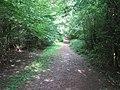 Bridleway in Dene Park - geograph.org.uk - 1399469.jpg