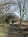 Broadoak Wood - geograph.org.uk - 709485.jpg