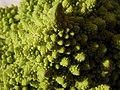Broccoli DSCN4326.jpg
