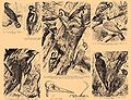 Brockhaus and Efron Encyclopedic Dictionary b21 402-0.jpg