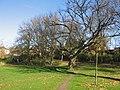 Broxbourne Gardens - geograph.org.uk - 608698.jpg