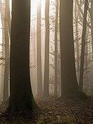 Bruderwald Nebel 286411.jpg