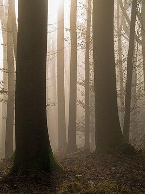 Fog in the Bruderwald natural forest reserve