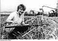 Bundesarchiv Bild 183-1986-0730-028, LPG Streesow,Getreideernte.jpg