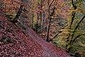 BurgEltz Forest Colors.JPG