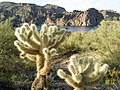 Butcher Jones Trail - Mt. Pinter Loop Trail, Saguaro Lake - panoramio (48).jpg