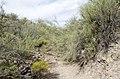 Butcher Jones Trail to Pinter's Point Loop, Tonto National Park, Saguaro Lake, Ft. McDowell, AZ - panoramio (158).jpg