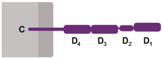 CD4 - Schematic representation of CD4 receptor.