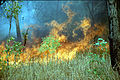 CSIRO ScienceImage 317 Fires in the Top End.jpg