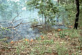 CSIRO ScienceImage 359 Wet Season Burning.jpg
