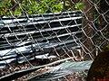 Cachorro-do-mato (Cerdocyon thous) é um animal de hábitos noturno, arisco e solitário. Pesa entre 5 a 8 kg, um animal adulto tem 65 cm de comprimento, com a cauda medindo cerca de 30 cm. Seu corpo é pe - panoramio.jpg