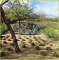 Cactus Garden - Sunnylands, California - 22 Feb. 2014.jpg
