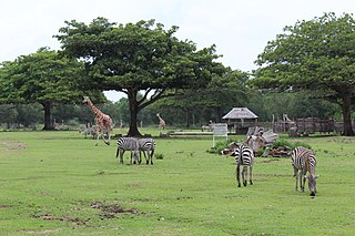Calauit Safari Park Philippine animal sanctuary