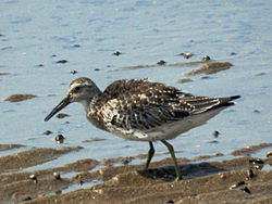 Great knot at the water's edge