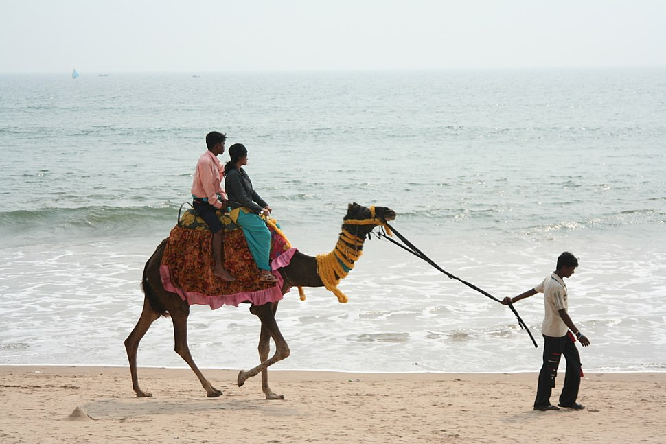 Camel ride along the beach